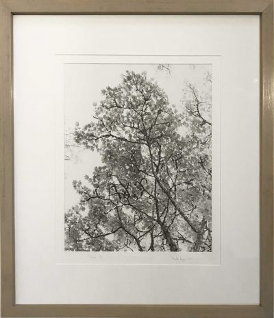 gunn-light-tree-400x463 Ander Gunn   June