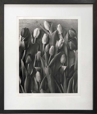 gunn-many-tulips-400x468 Ander Gunn  Tulips