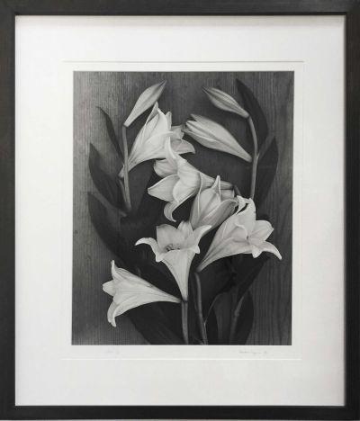 gunn-tulips-400x468 Ander Gunn Lilies