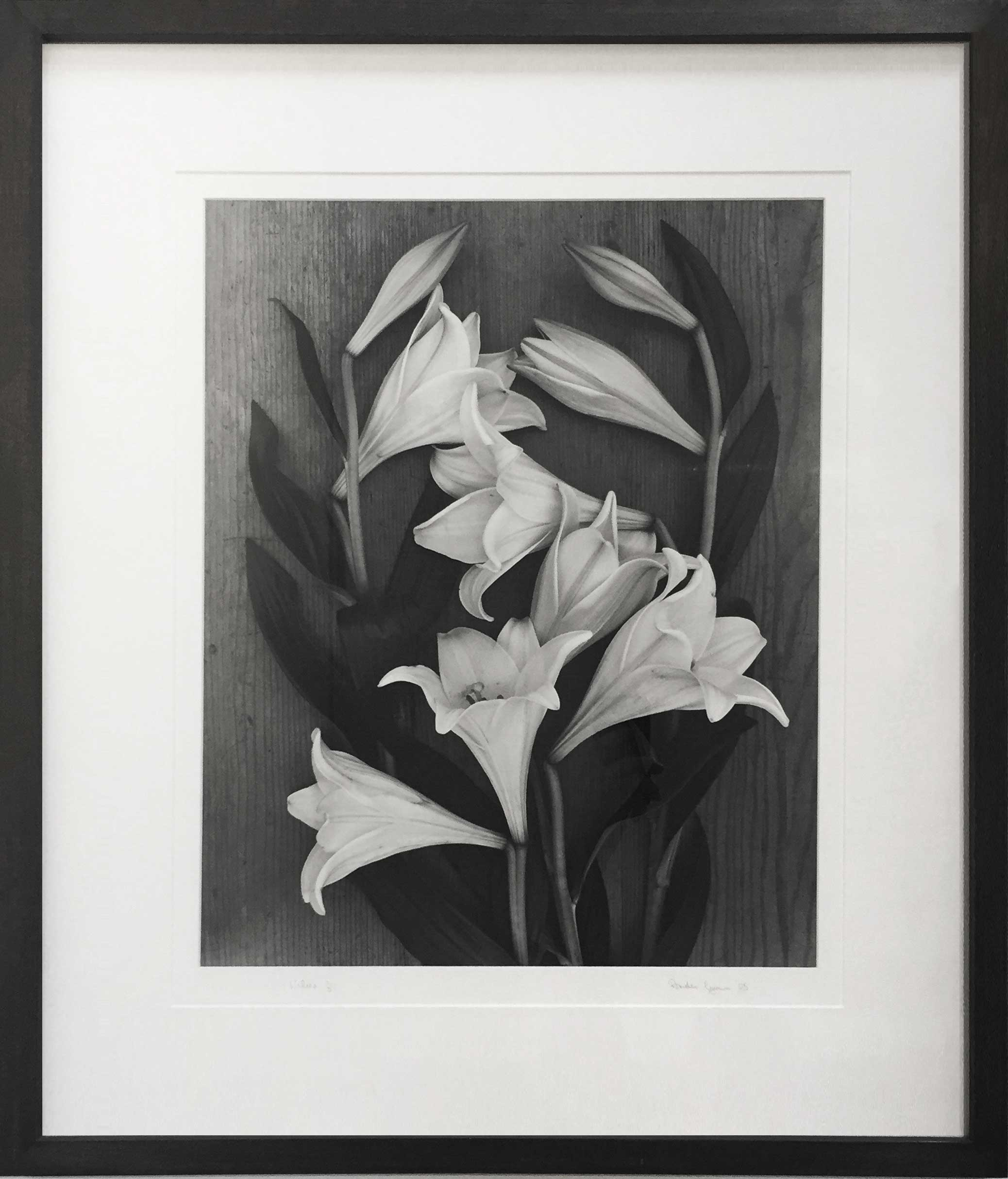 gunn-tulips Next exhibition:<br>Petronilla Silver at Rocco Flowers