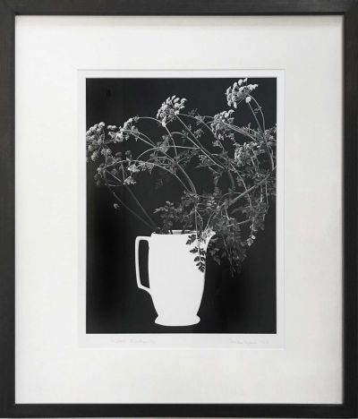 gunn-white-jug-400x468 Ander Gunn Sweet Cicely