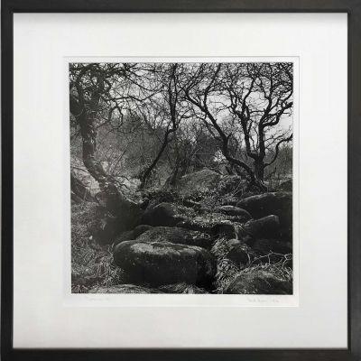 gunn-woods-400x400 Ander Gunn Dartmoor